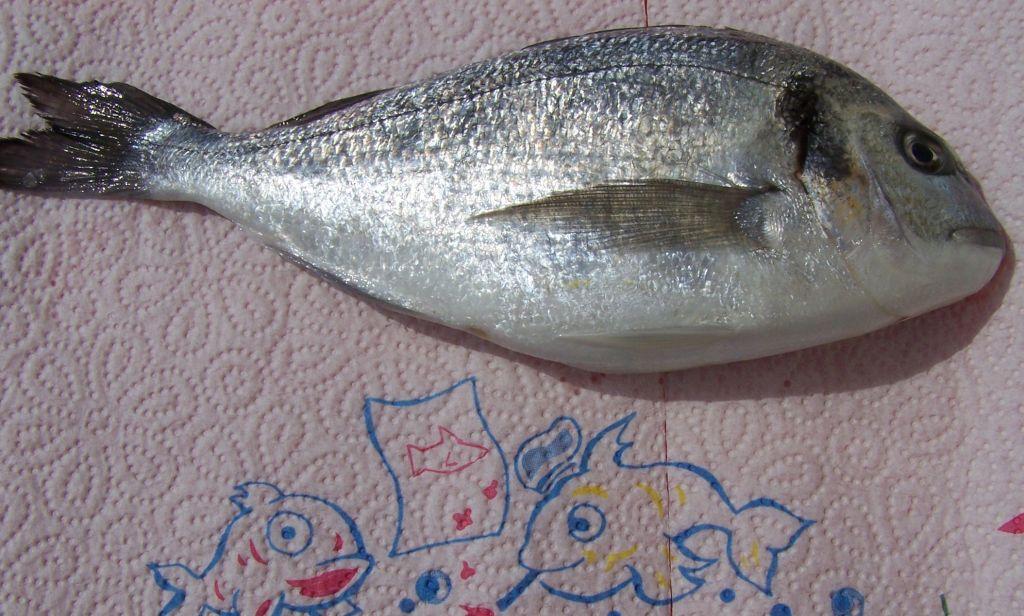 eetbare vissen nederland